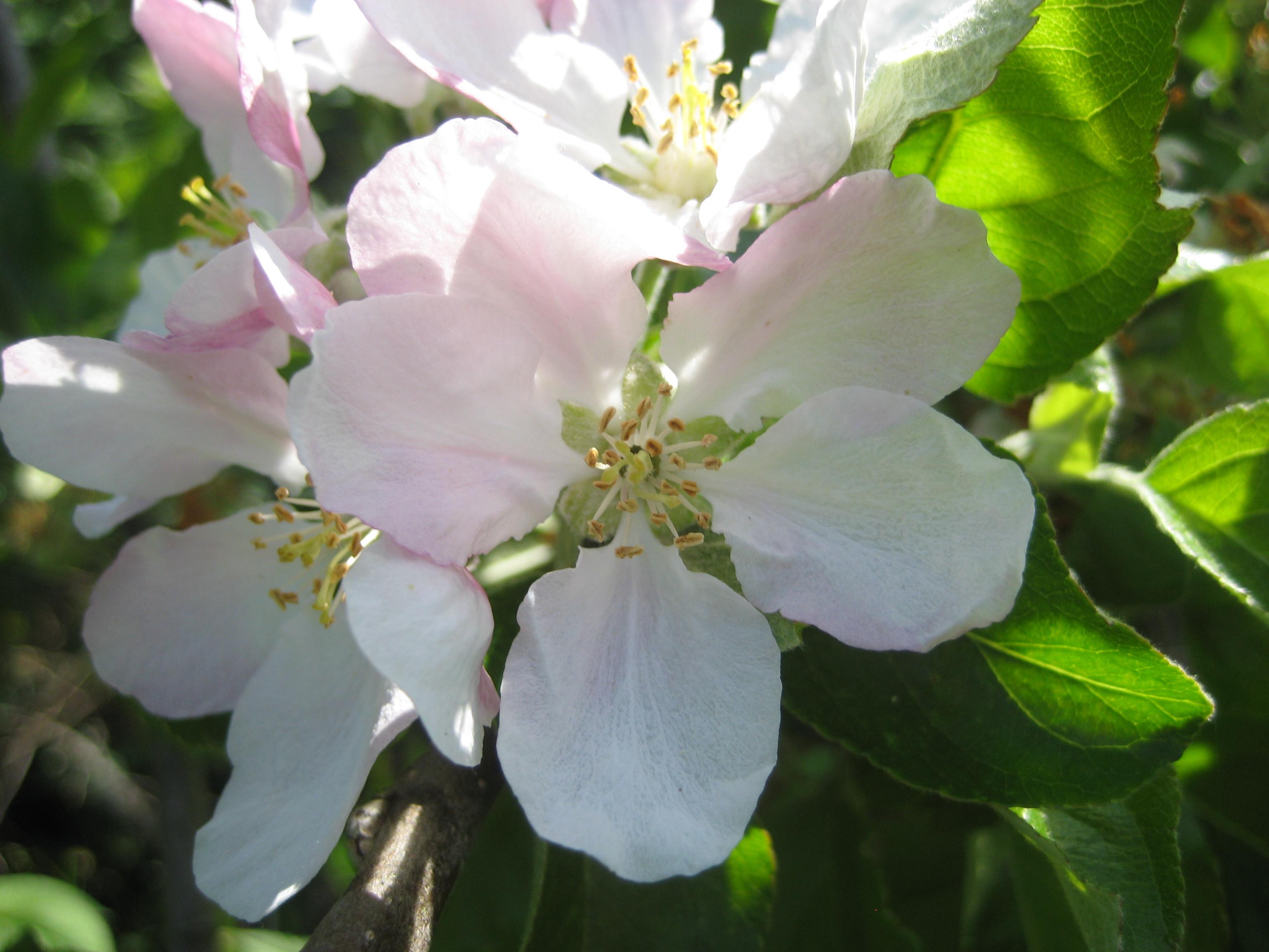 apple_variety-2